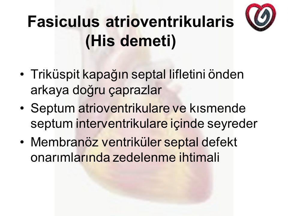 Fasiculus atrioventrikularis (His demeti)