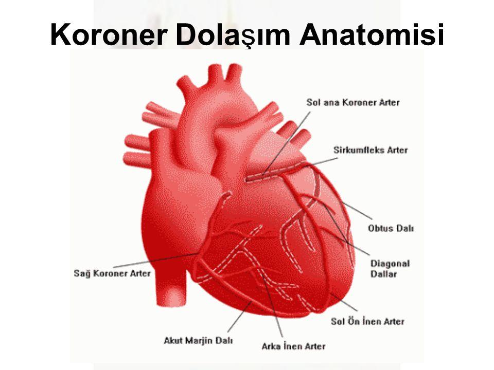Koroner Dolaşım Anatomisi