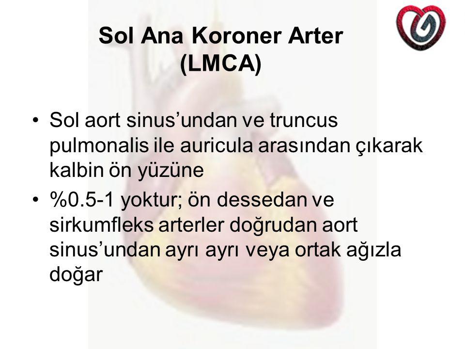 Sol Ana Koroner Arter (LMCA)