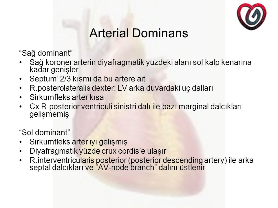Arterial Dominans Sağ dominant
