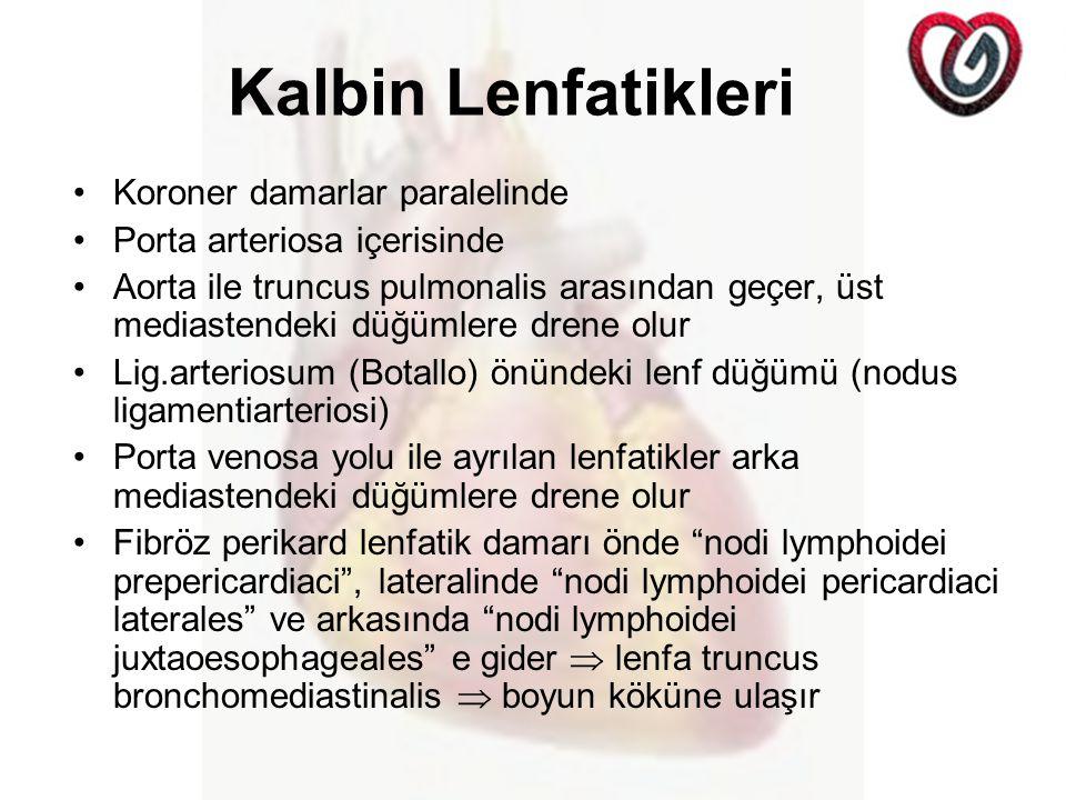 Kalbin Lenfatikleri Koroner damarlar paralelinde