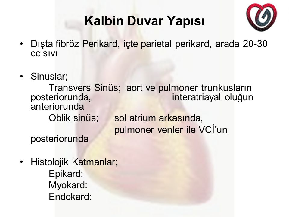 Kalbin Duvar Yapısı Dışta fibröz Perikard, içte parietal perikard, arada 20-30 cc sıvı. Sinuslar;