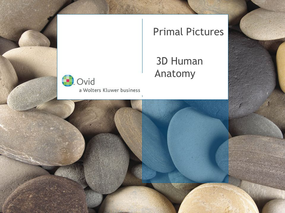 Primal Pictures 3D Human Anatomy