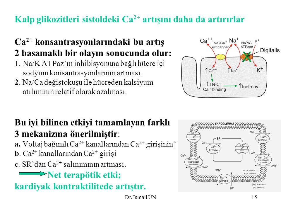 Kalp glikozitleri sistoldeki Ca2+ artışını daha da artırırlar
