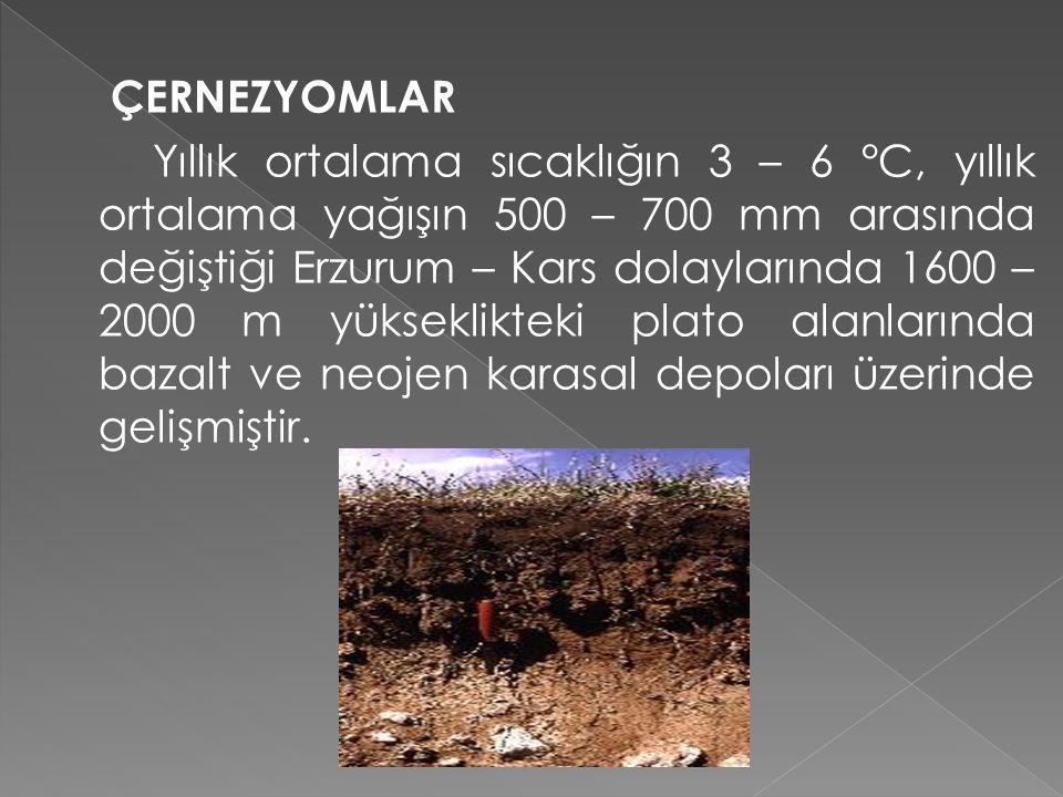 ÇERNEZYOMLAR Yıllık ortalama sıcaklığın 3 – 6 °C, yıllık ortalama yağışın 500 – 700 mm arasında değiştiği Erzurum – Kars dolaylarında 1600 – 2000 m yükseklikteki plato alanlarında bazalt ve neojen karasal depoları üzerinde gelişmiştir.