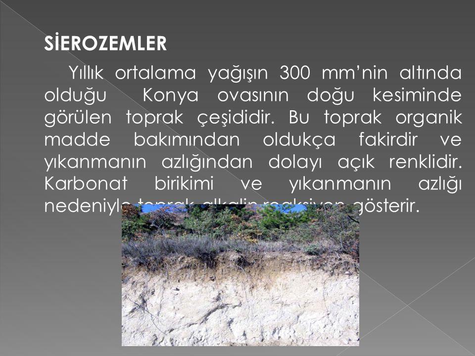 SİEROZEMLER