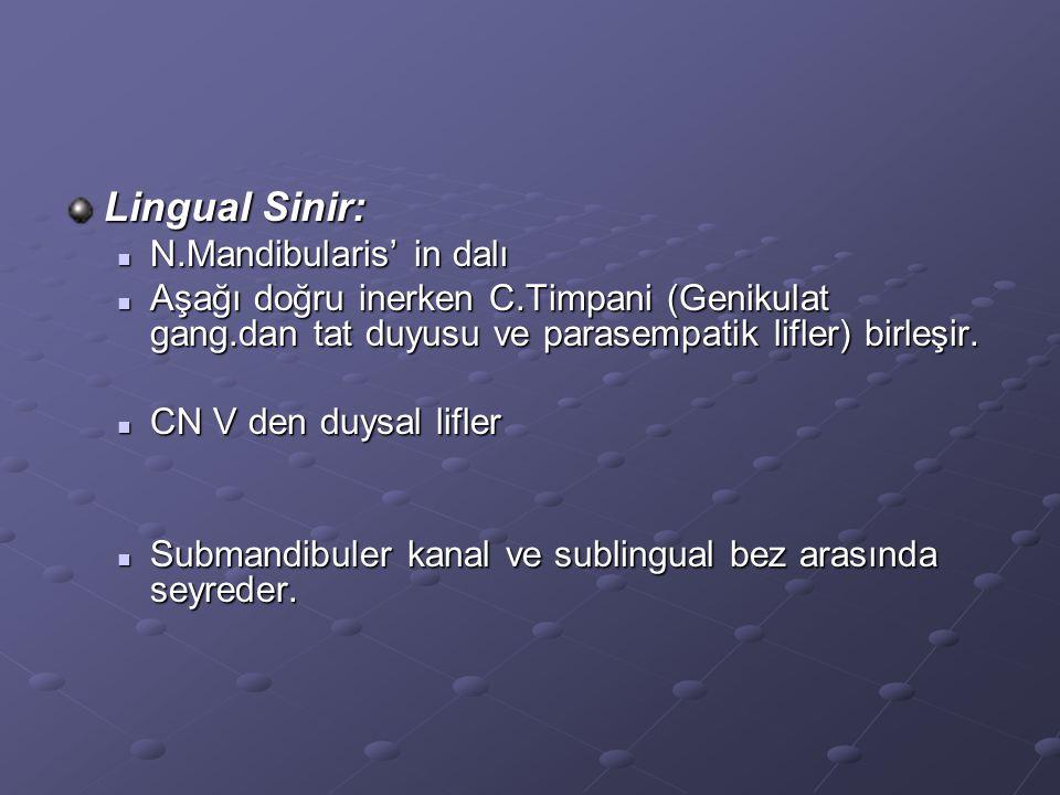 Lingual Sinir: N.Mandibularis' in dalı