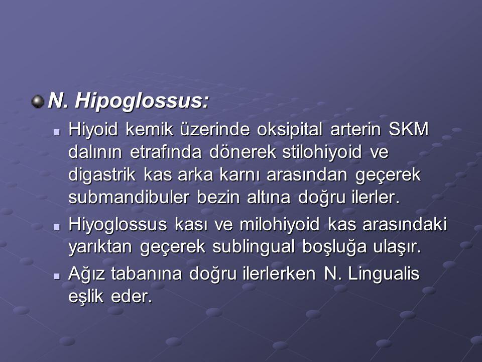 N. Hipoglossus:
