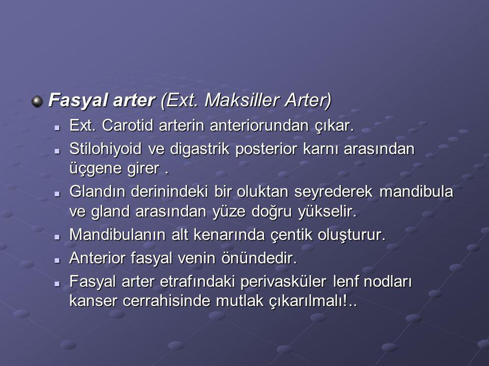 Fasyal arter (Ext. Maksiller Arter)
