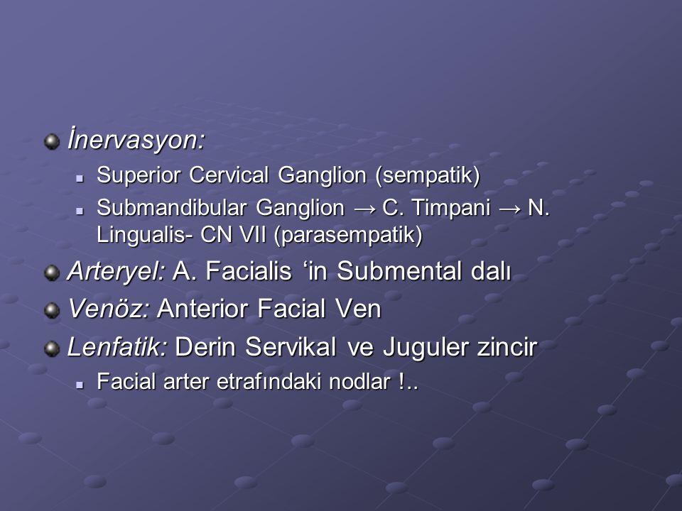 Arteryel: A. Facialis 'in Submental dalı Venöz: Anterior Facial Ven