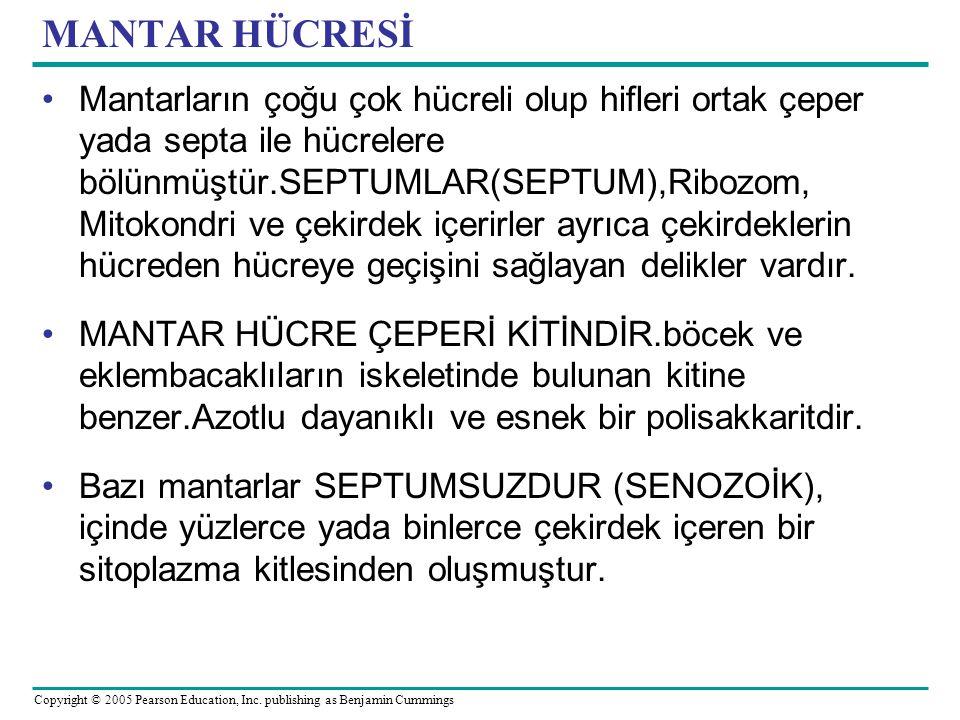 MANTAR HÜCRESİ