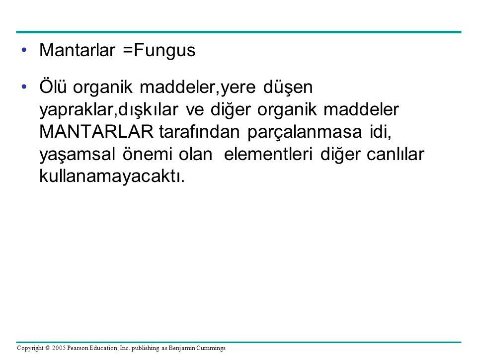 Mantarlar =Fungus