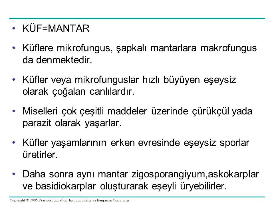 KÜF=MANTAR Küflere mikrofungus, şapkalı mantarlara makrofungus da denmektedir.