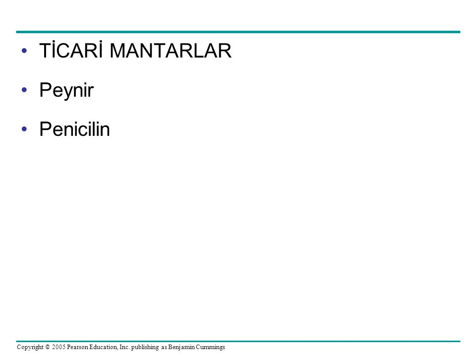 TİCARİ MANTARLAR Peynir Penicilin