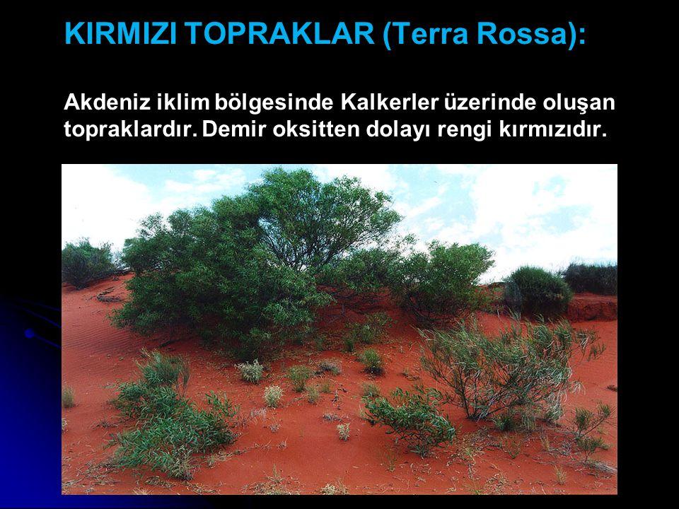 KIRMIZI TOPRAKLAR (Terra Rossa): Akdeniz iklim bölgesinde Kalkerler üzerinde oluşan topraklardır.