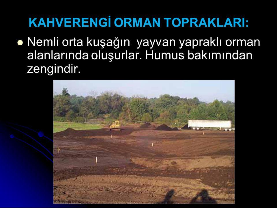 KAHVERENGİ ORMAN TOPRAKLARI: