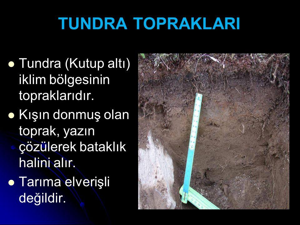 TUNDRA TOPRAKLARI Tundra (Kutup altı) iklim bölgesinin topraklarıdır.