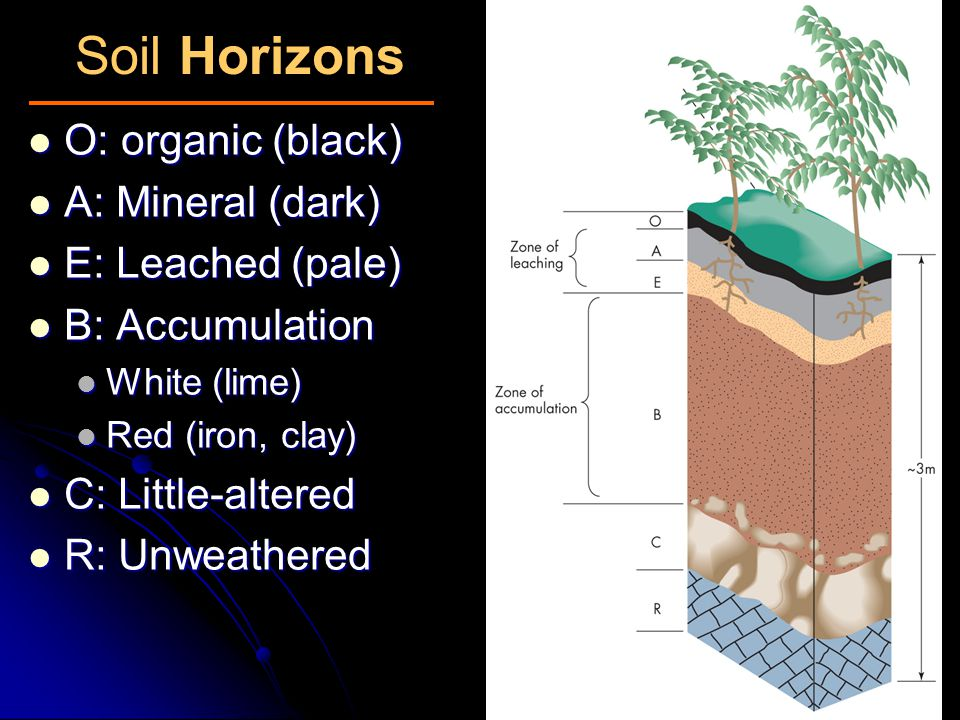Soil Horizons O: organic (black) A: Mineral (dark) E: Leached (pale)