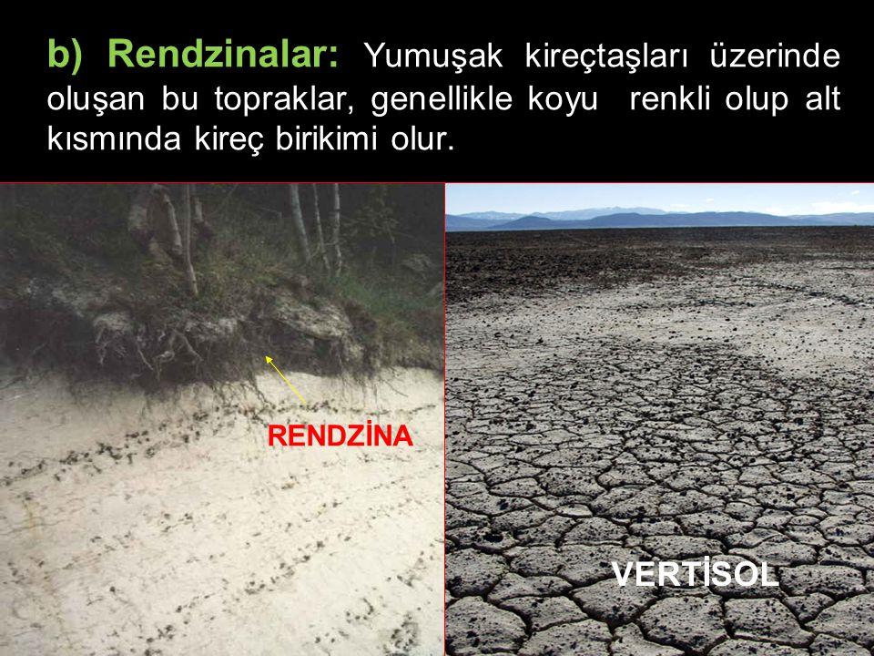 b) Rendzinalar: Yumuşak kireçtaşları üzerinde oluşan bu topraklar, genellikle koyu renkli olup alt kısmında kireç birikimi olur.