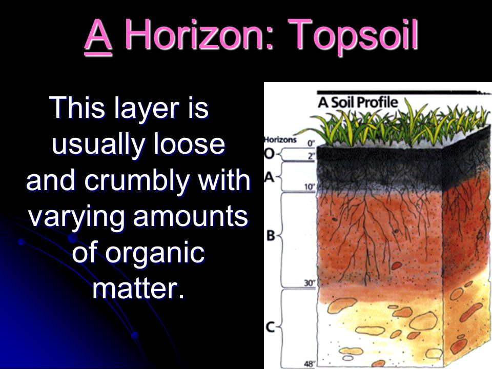 A Horizon: Topsoil This layer is usually loose and crumbly with varying amounts of organic matter.