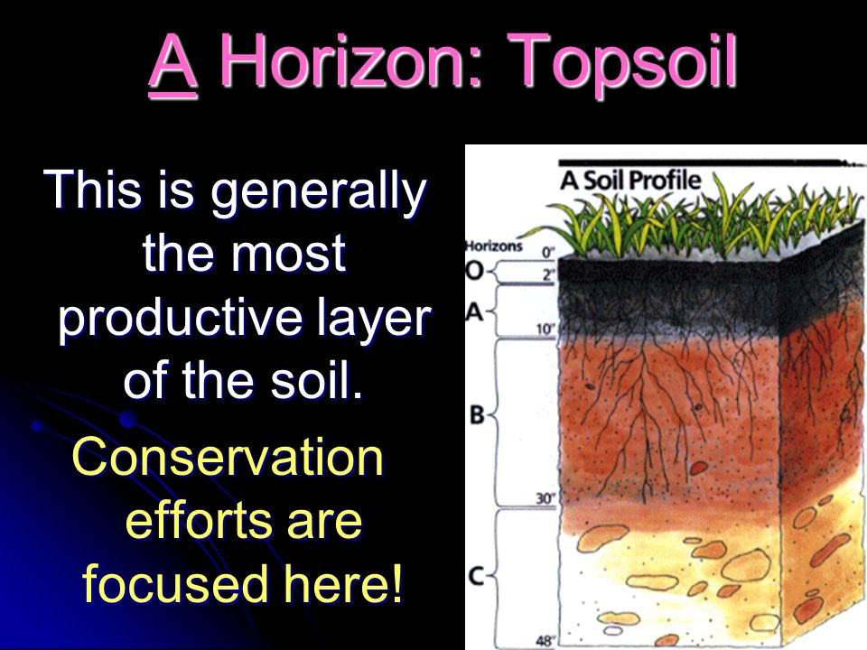 A Horizon: Topsoil This is generally the most productive layer of the soil.