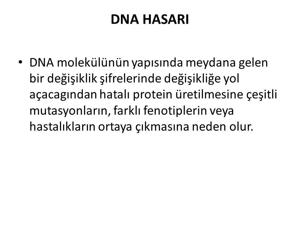 DNA HASARI