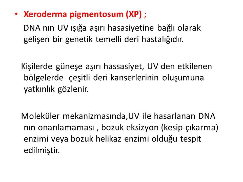 Xeroderma pigmentosum (XP) ;