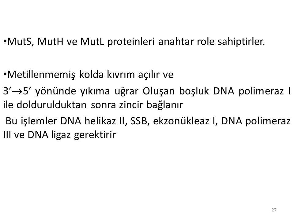 MutS, MutH ve MutL proteinleri anahtar role sahiptirler.