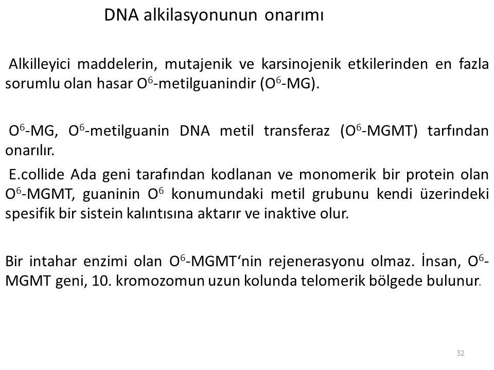 DNA alkilasyonunun onarımı