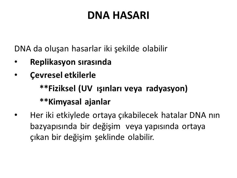 DNA HASARI DNA da oluşan hasarlar iki şekilde olabilir