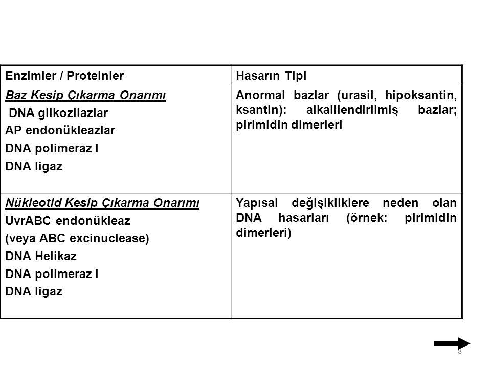 Enzimler / Proteinler Hasarın Tipi. Baz Kesip Çıkarma Onarımı. DNA glikozilazlar. AP endonükleazlar.
