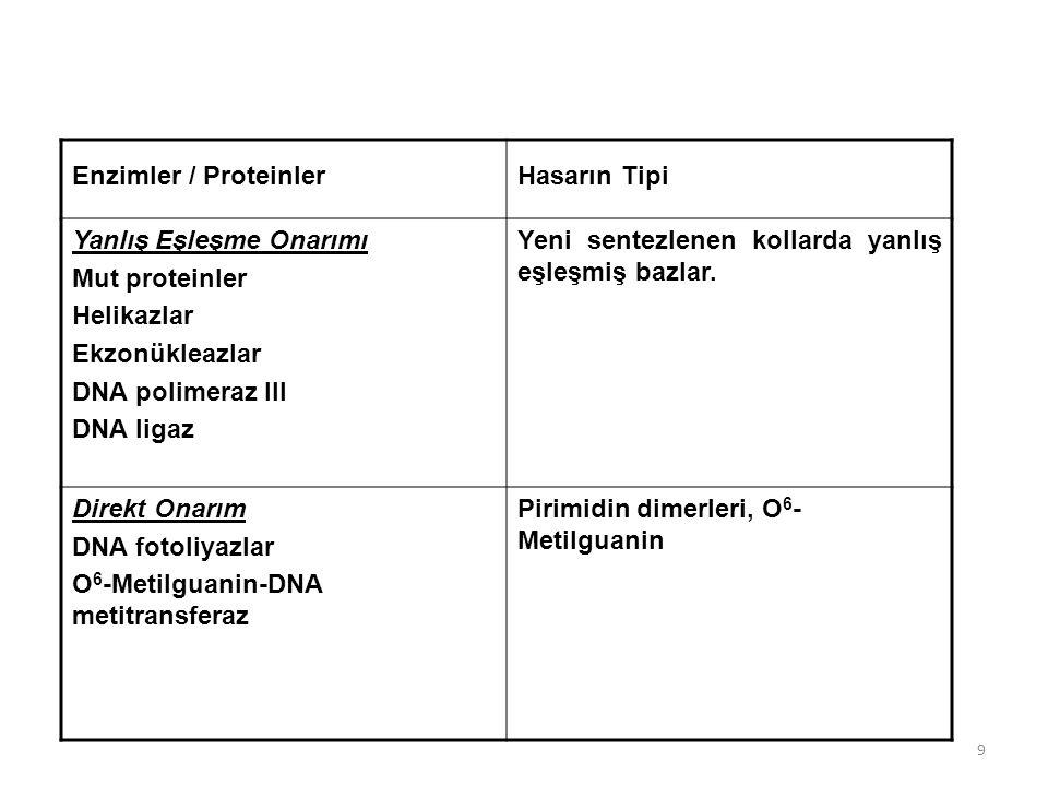 Enzimler / Proteinler Hasarın Tipi. Yanlış Eşleşme Onarımı. Mut proteinler. Helikazlar. Ekzonükleazlar.
