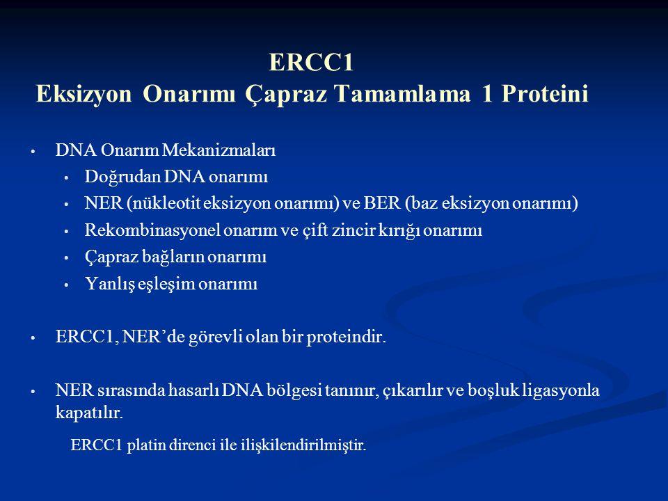 ERCC1 Eksizyon Onarımı Çapraz Tamamlama 1 Proteini