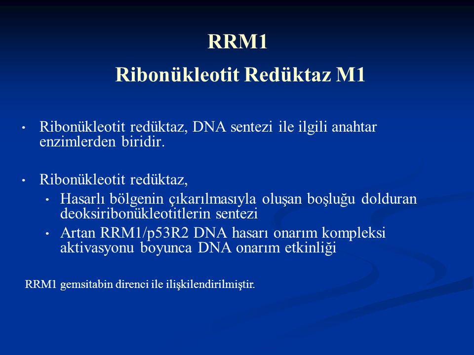 RRM1 Ribonükleotit Redüktaz M1
