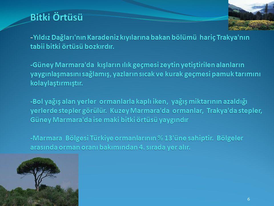 Bitki Örtüsü -Yıldız Dağları nın Karadeniz kıyılarına bakan bölümü hariç Trakya nın tabii bitki örtüsü bozkırdır. -Güney Marmara da kışların ılık geçmesi zeytin yetiştirilen alanların yaygınlaşmasını sağlamış, yazların sıcak ve kurak geçmesi pamuk tarımını kolaylaştırmıştır.