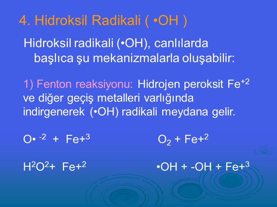 4. Hidroksil Radikali ( •OH )