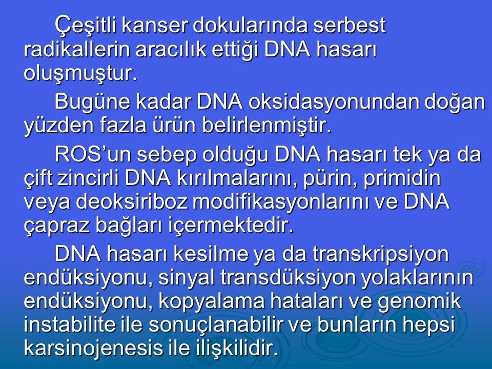 Çeşitli kanser dokularında serbest radikallerin aracılık ettiği DNA hasarı oluşmuştur.