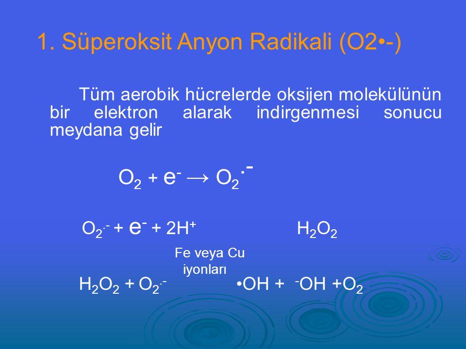 1. Süperoksit Anyon Radikali (O2•-)
