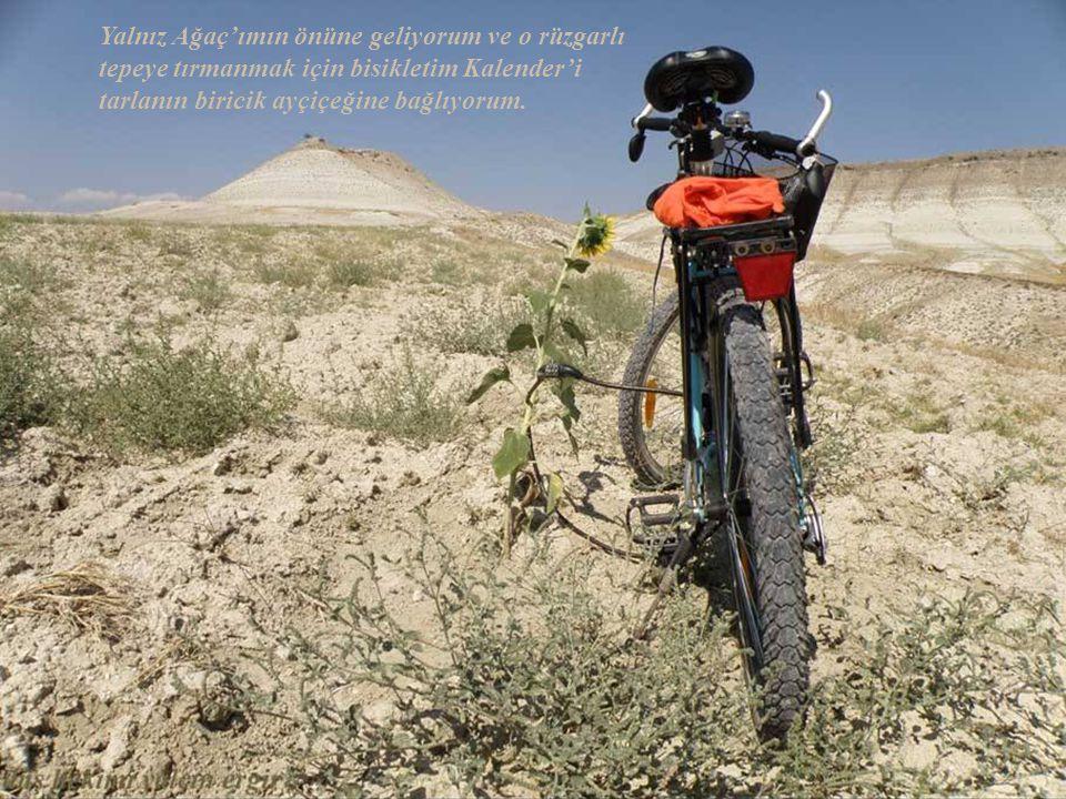 Yalnız Ağaç'ımın önüne geliyorum ve o rüzgarlı tepeye tırmanmak için bisikletim Kalender'i tarlanın biricik ayçiçeğine bağlıyorum.
