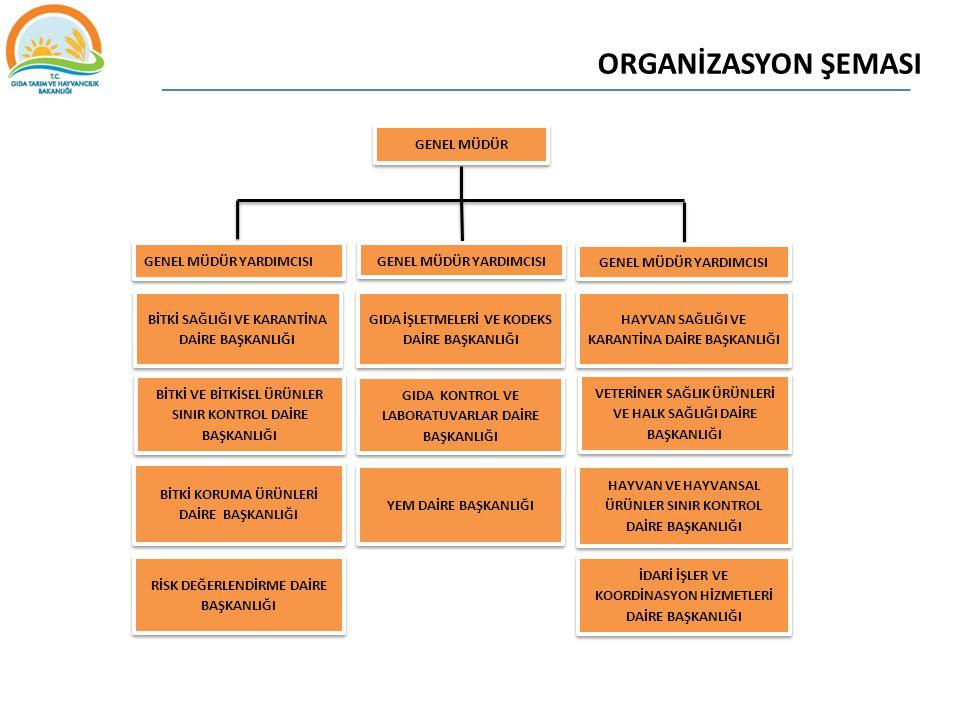 ORGANİZASYON ŞEMASI GENEL MÜDÜR YARDIMCISI