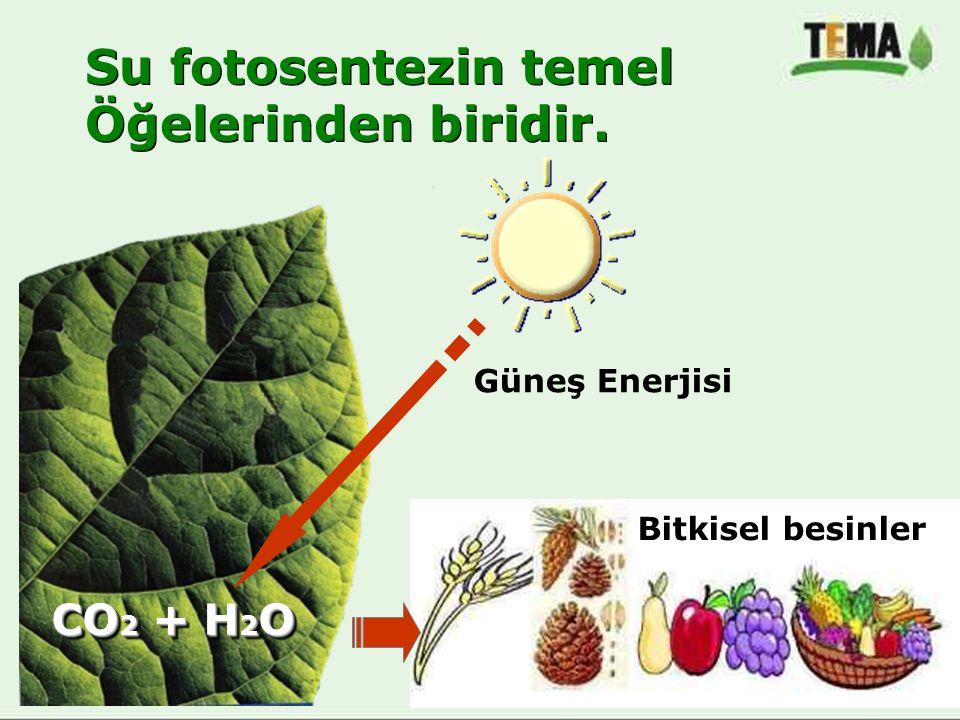 Su fotosentezin temel Öğelerinden biridir. CO2 + H2O Güneş Enerjisi