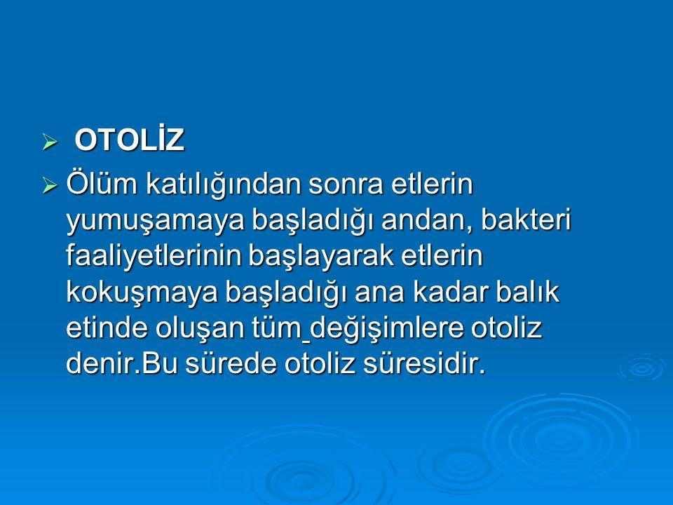OTOLİZ