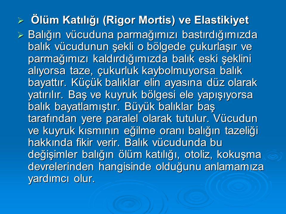 Ölüm Katılığı (Rigor Mortis) ve Elastikiyet