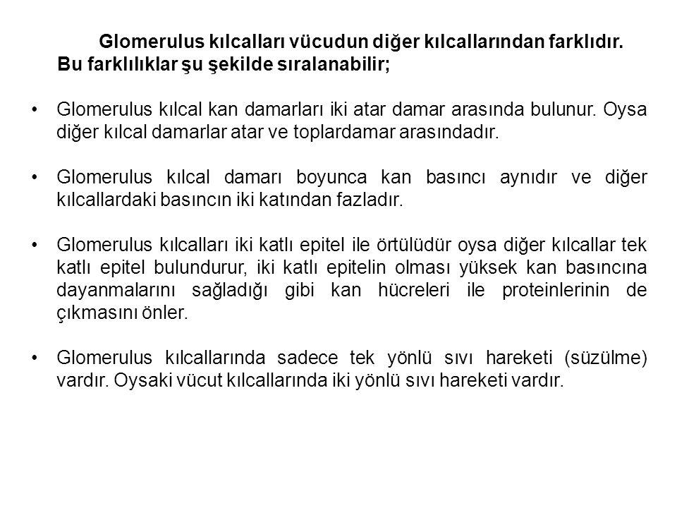 Glomerulus kılcalları vücudun diğer kılcallarından farklıdır.
