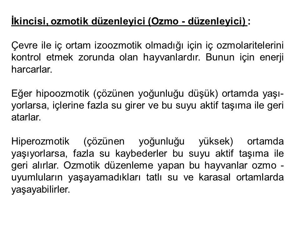 İkincisi, ozmotik düzenleyici (Ozmo - düzenleyici) :