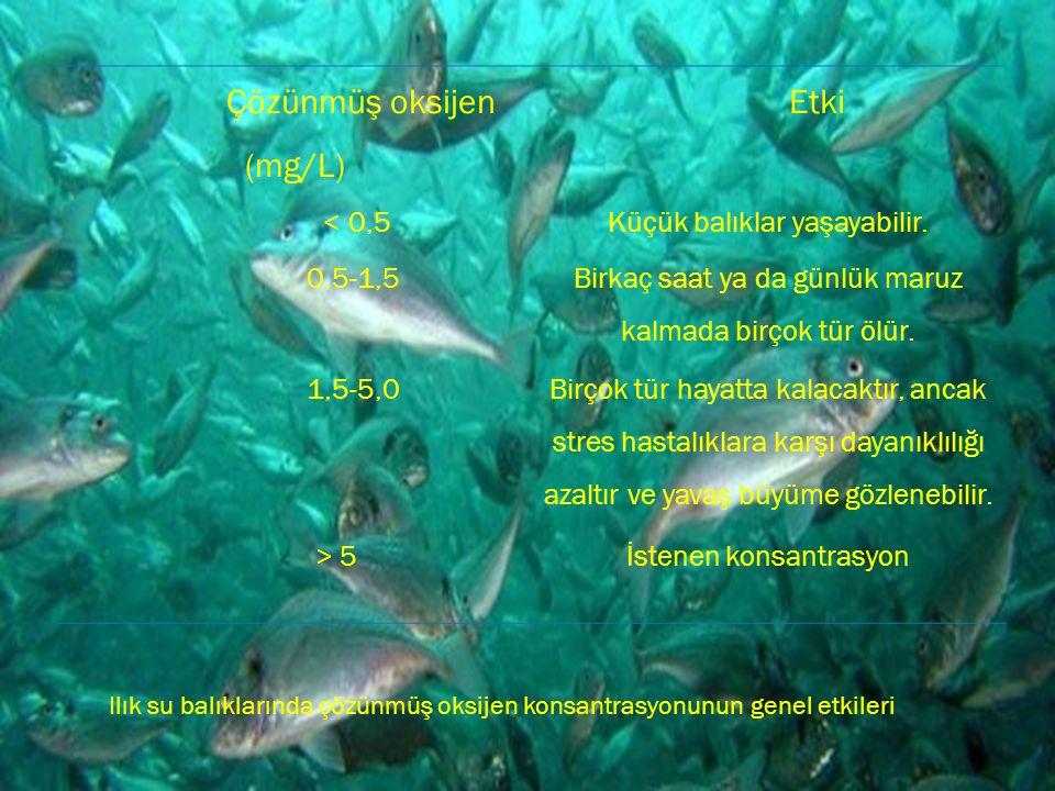 Çözünmüş oksijen (mg/L) Etki