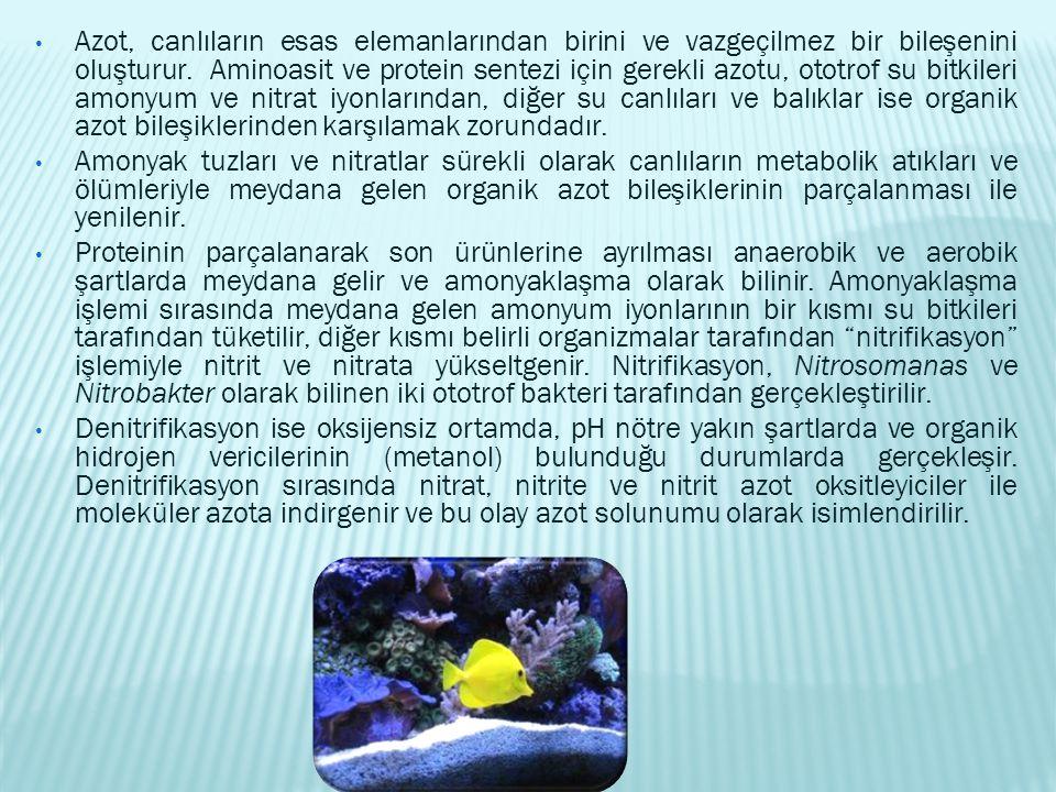 Azot, canlıların esas elemanlarından birini ve vazgeçilmez bir bileşenini oluşturur. Aminoasit ve protein sentezi için gerekli azotu, ototrof su bitkileri amonyum ve nitrat iyonlarından, diğer su canlıları ve balıklar ise organik azot bileşiklerinden karşılamak zorundadır.