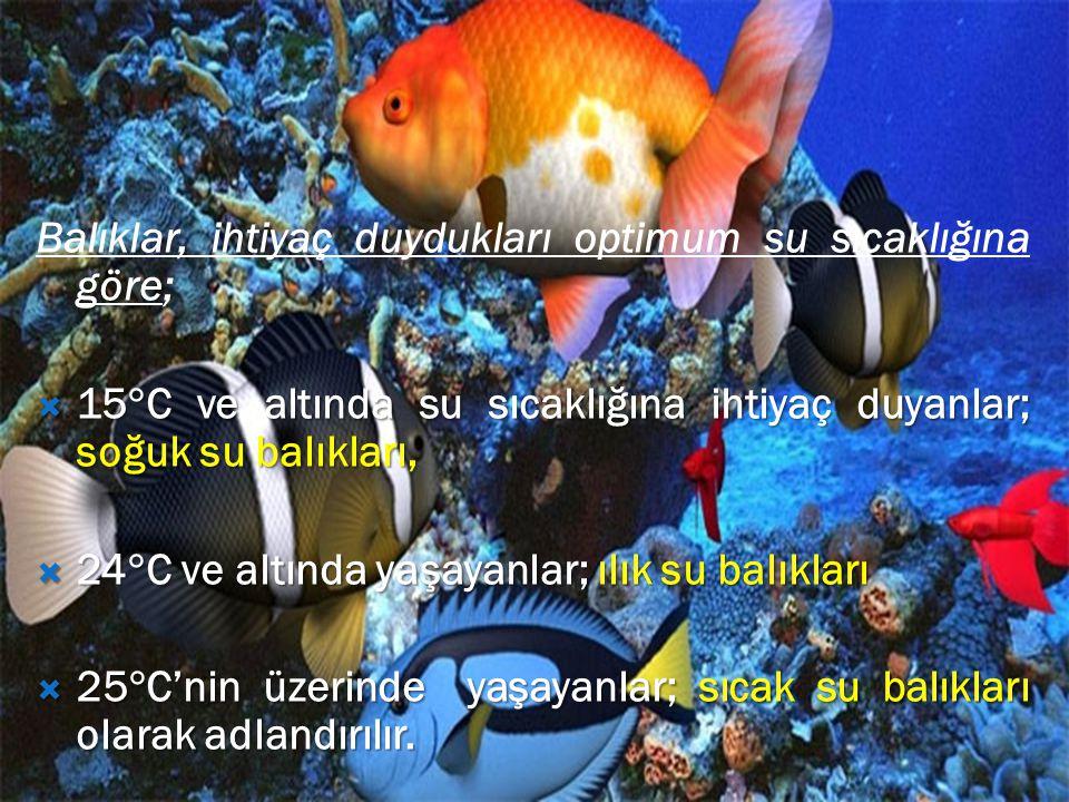 Balıklar, ihtiyaç duydukları optimum su sıcaklığına göre;