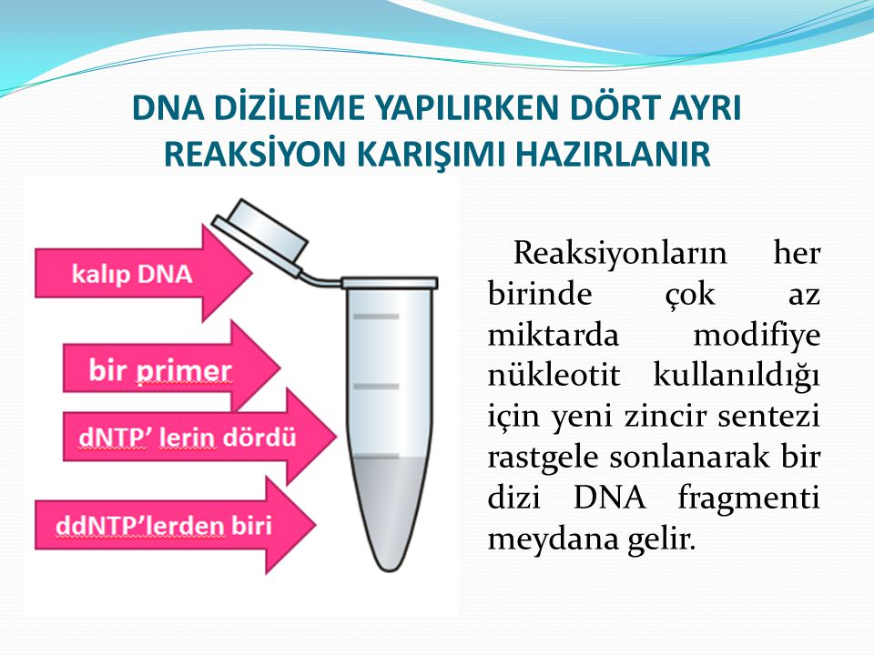 DNA DİZİLEME YAPILIRKEN DÖRT AYRI REAKSİYON KARIŞIMI HAZIRLANIR