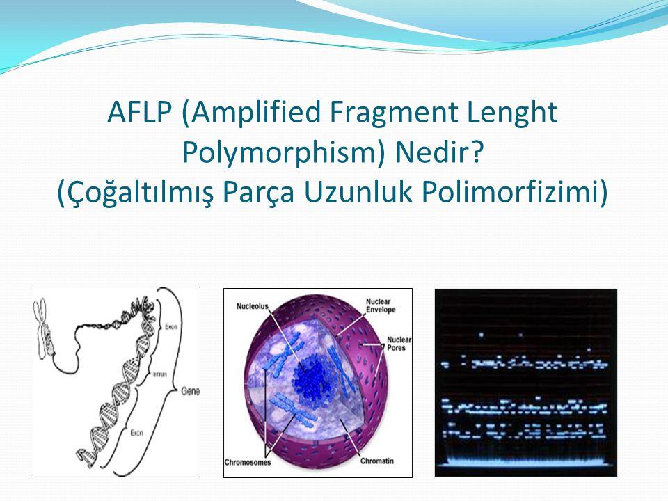 AFLP (Amplified Fragment Lenght Polymorphism) Nedir